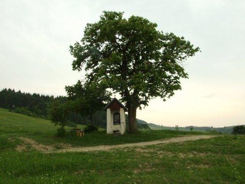 Stran - Kotrcina Lucka-11785949.jpg